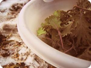 kale1 (A December 31st Harvest & the Hoop House)