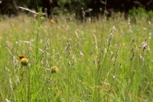 IMG_7554 (Spring's Last Hurrah)