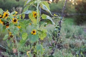 IMG_6781 (2) (Garden Morning Light)
