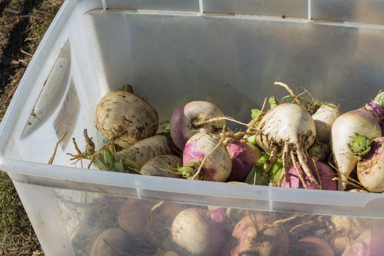 turnips-tote