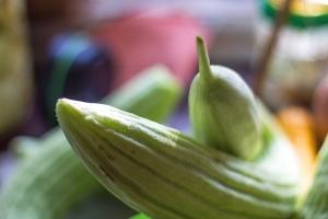 cucumberfruit (This Week In The Garden)